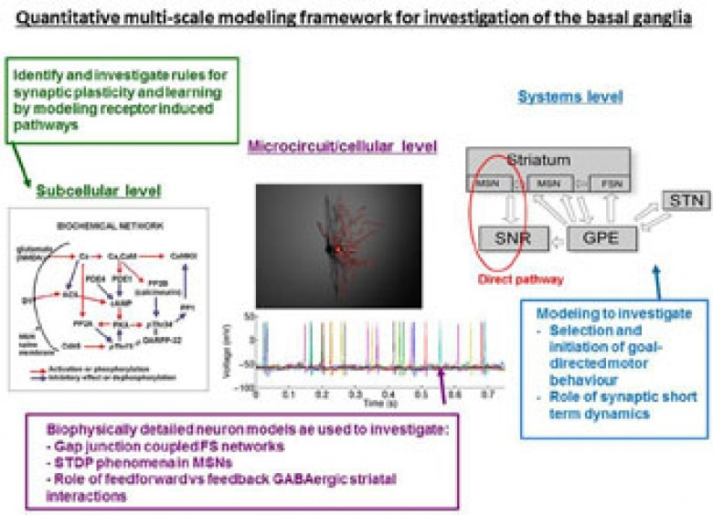 Quantitative multi-scale modeling framework for investigation of the basal ganglia
