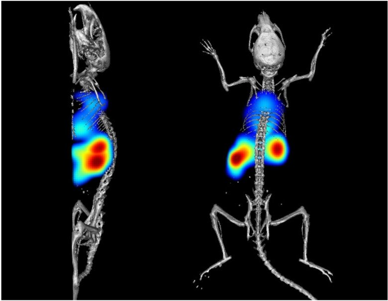 Imaging of rodents.