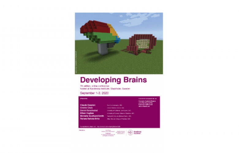 Developing Brains poster 2020